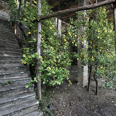 Garda Lemon Groves
